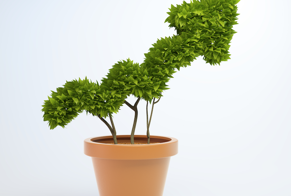 Growing your business value